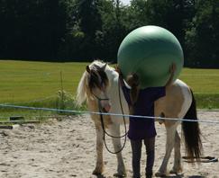 Erfolgserlebnisse für Pferd und Mensch mit Horse Agility