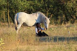 Pferdetraining auf Basis des freien Willens