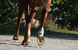Das Pferd beginnt beim Huf