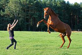 Pferde durch Training schöner machen