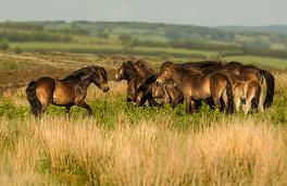 Wildpferde – was wir von ihnen lernen können