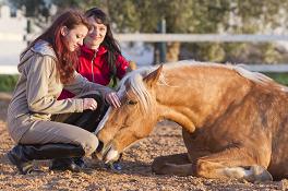 Vertrauenstraining zwischen Pferd und Mensch