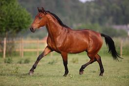 Pferdepersönlichkeiten erkennen nach den 5 Elementen