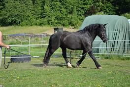 Lebendige Biomechanik aus der Sicht des Pferdes
