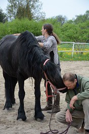 Energetik trifft einfühlsames Pferdetraining