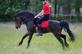 Kolumne – Was das Pferd mir sagen will ….