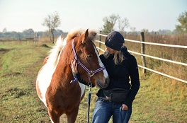 Pferde brauchen Klarheit