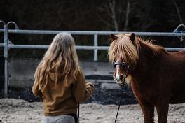 Alte Pferde und Faszientraining