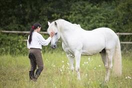 Mein Pferd wird alt