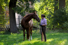 Von Pferden mit Menschenproblemen