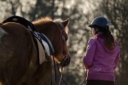 Stress in der Pferdeausbildung erkennen und vermeiden