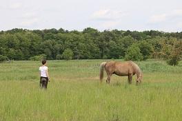Das Pferd als Spiegel menschlicher Traumata
