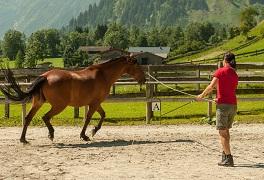Die natürliche Schiefe des Pferdes ganzheitlich betrachtet