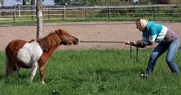 Konsequenz schafft Vertrauen – Klare Regeln mit dem Partner Pferd