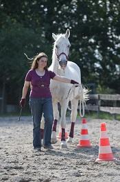 Ausbilden statt abrichten – Mit Geduld zur richtigen Pferdeausbildung