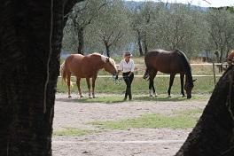 Die heilenden Kräfte der Pferde führen zur inneren Stärke