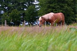 Gesunde Pferde durch gesundes Gras