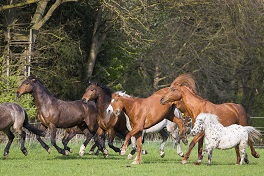 Die Sprache der Pferde