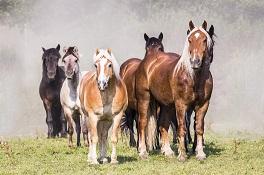 Glückliche Pferde …
