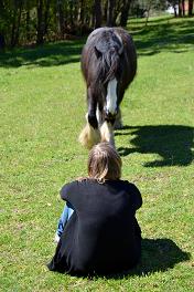 Kostbare Zeit mit Freund Pferd