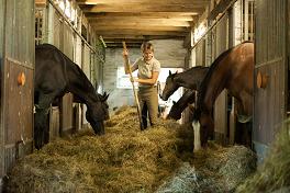 Leistungspferde ohne Kraftfutter