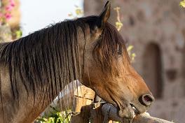 Wenn Pferde komische Sachen fressen