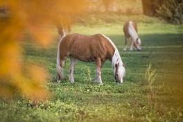 Pferdegerechtes Weidemanagement