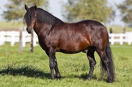 Dickes Pferd – was nun?