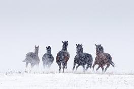 Winterbeschäftigung für Pferde