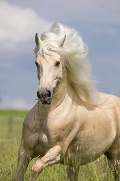Dein Pferd in den 5 Elementen