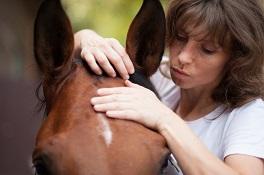 Craniosacraltherapie für Pferde