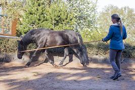 Pferdegerechte Trainingsumstellung