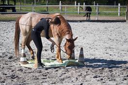 Pferdeausbildung – zu früh?