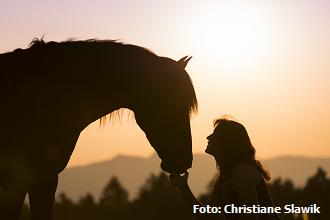 Mentale Kommunikation mit Pferden