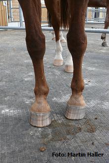 Ohne Pferd kein Huf