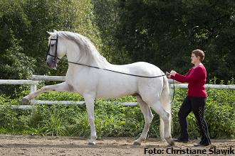 Ohne Pferd kein Huf - muskuläre Fehlhaltungen