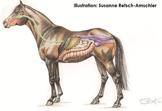 Naturalhorse
