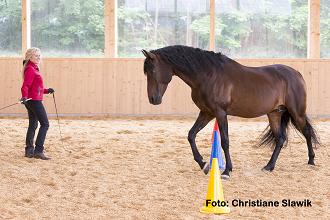 Pferde optimal fördern