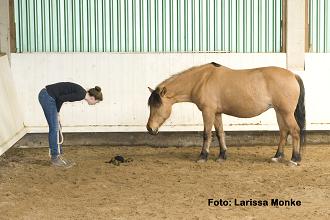 Pferdesprache – (k)ein Problem?