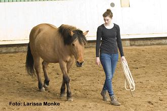 Zuerst Pferdesprache anwenden