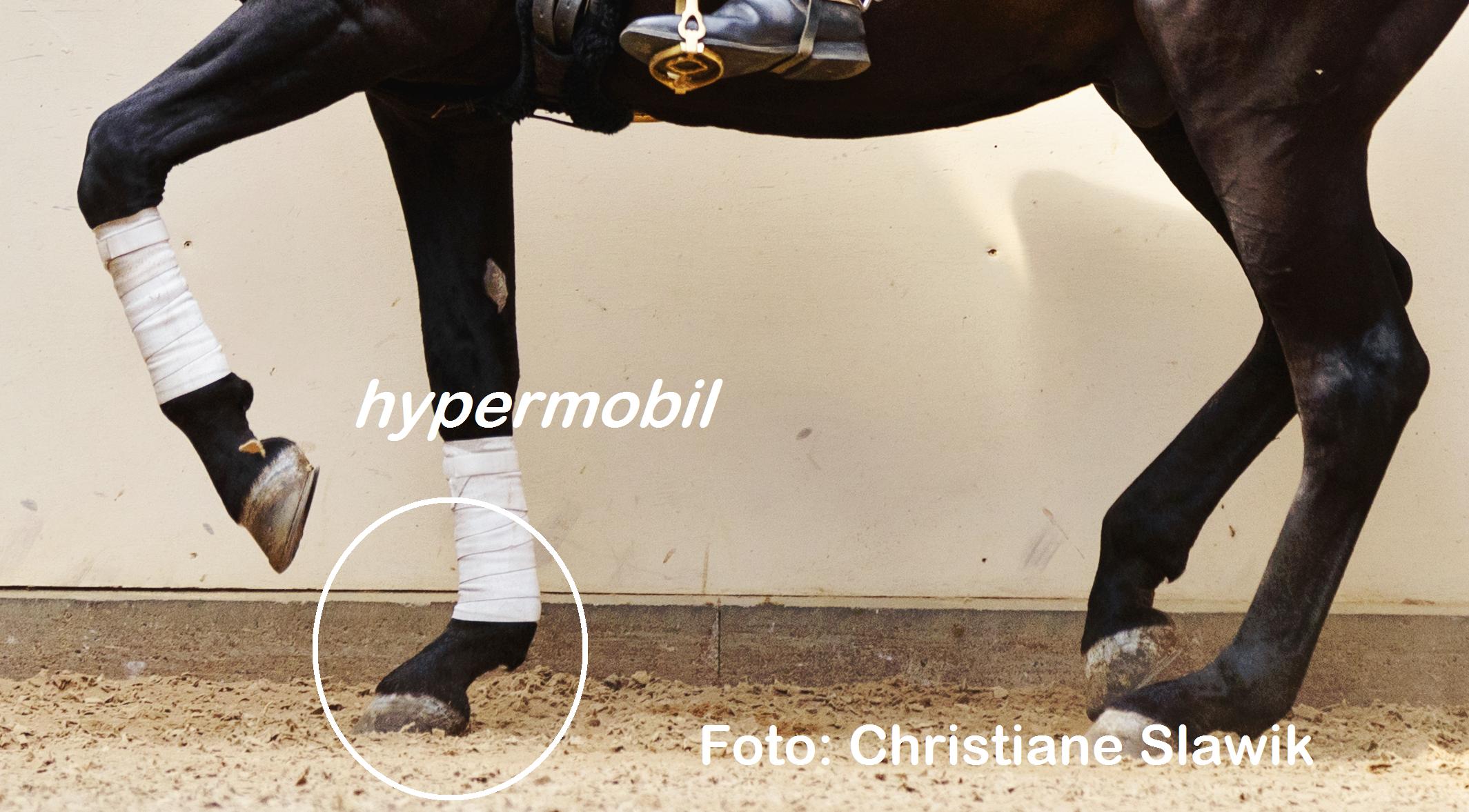 Hypermobilität beim Pferd