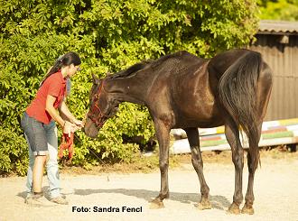 Alte Pferde gesund trainieren