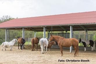 Pferdesenioren im Offenstall