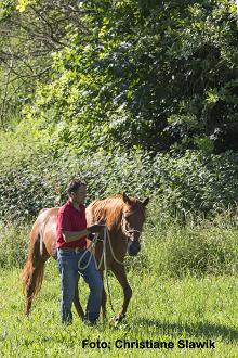 Sanfte Beschäftigung für Pferderentner