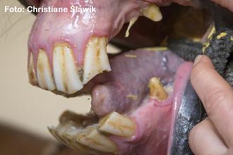 Oldies auf den Zahn gefühlt