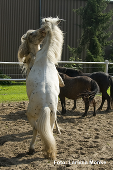 Was ist Pferdesprache?