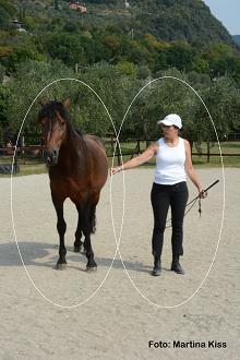 Pferde als geniale Coaches