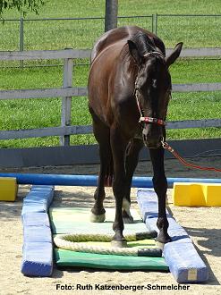 Das Körpergefühl des Pferdes verbessern