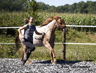 Das Pferd – dein Freund oder Feind?
