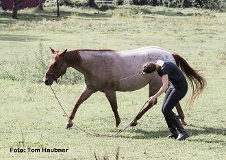 Mindset für Pferdemenschen